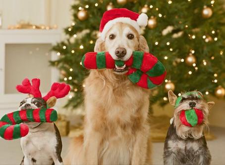 #WoofTips para Noche Buena y Fin de Año con tu Perro