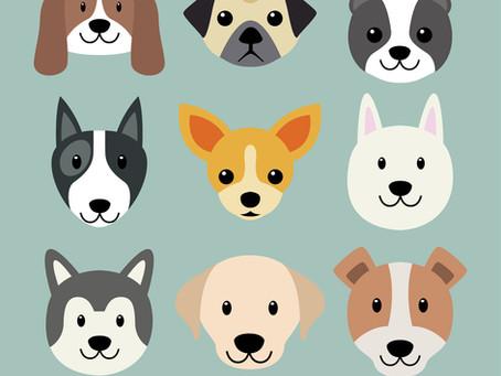 ¿Qué debo considerar si quiero comprar/adoptar un Perro?