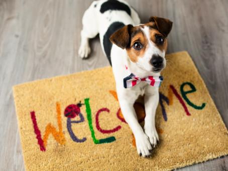 #WoofTips Para Enseñar a tu Perro a Recibir Visitas