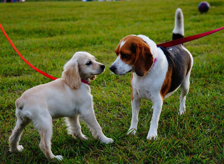 #WoofTips para Socializar a tu Perro