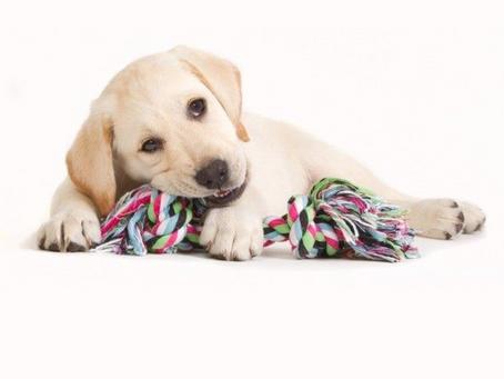 #WoofTips para el Periodo de Dentición de tu Cachorro