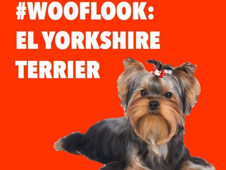 #WookLook : El Yorkshire Terrier