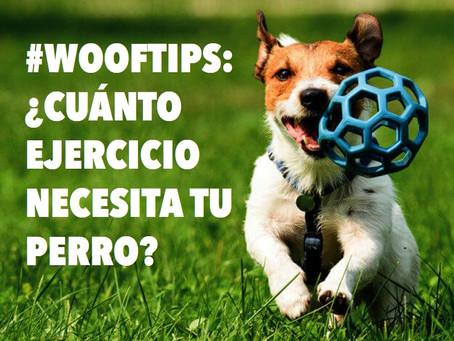#WoofTips: ¿Cuánto ejercicio necesita tu perro?