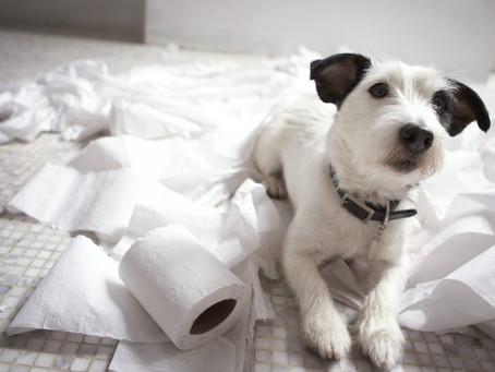 Como manejar la ansiedad por separación de tu perro