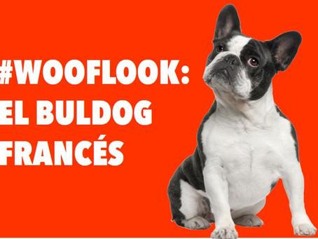 #WookLook : El Buldog Francés