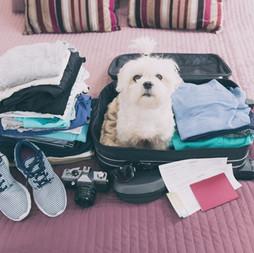 quero viajar com meu pet, o que fazer?