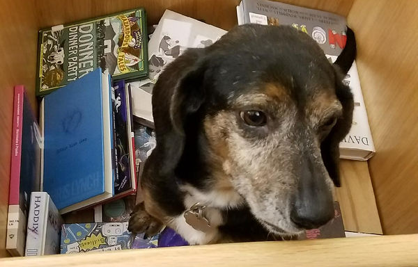 Our Dog Elvis sitign in the Library Books