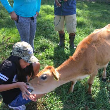 Casa Student feeding a Calf