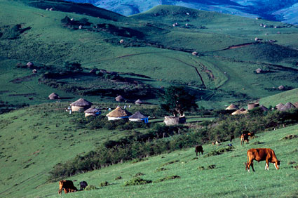 South-Africa-farming-picture-2