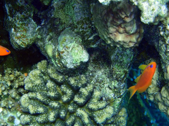 Рифовая гряда
