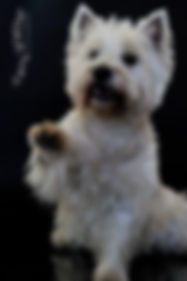Réglisse , première chienne de Fany Walther