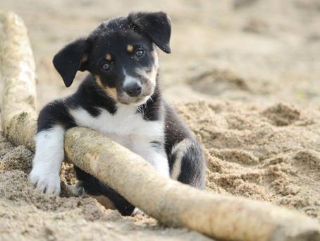 Notice d'utilisation du chien athlète