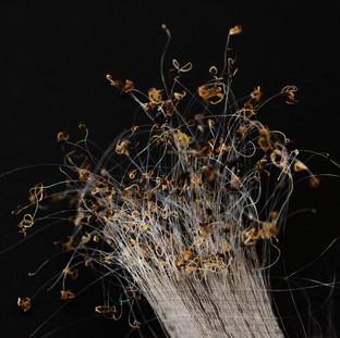 Cancer and Hair -Jean Christophe #3 / Paris, 2020