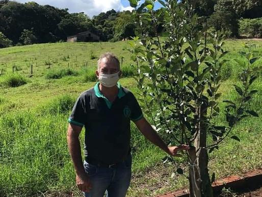Secretário da agricultura e engenheiro agrônomo de Tigrinhos visitam viveiro em Cunha Porã