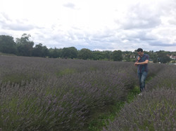 Lavender fields - what time's lunch?