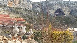 La Cueva.Vega del Codorno.