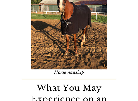 What You May Experience on Your OTTB's First Post Track Ride