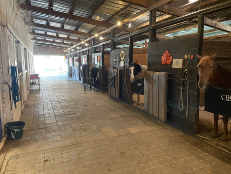 The Importance of having a Program Structure and Curriculum for your Equine Lesson Program