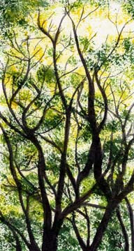 Drawn-to-the-sky-Summer-Leafy-Trees-Land