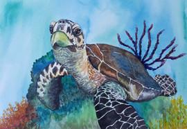 Sea-Turtle-Painting-Portrait.jpg