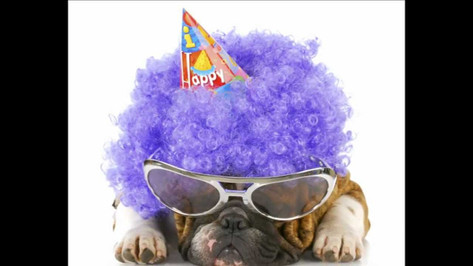 Happy Birthday Pooch Video