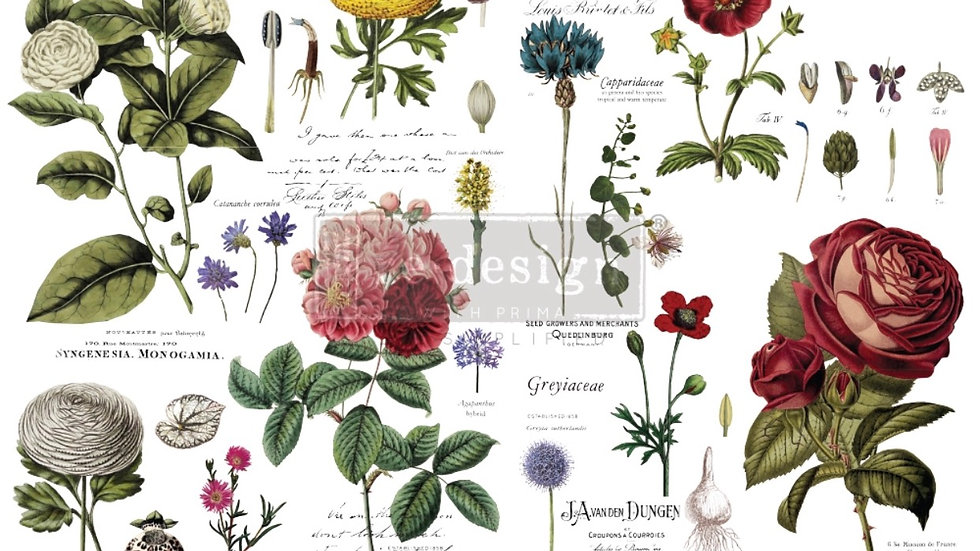 "Redesign Decor Transfer- Vintage Botanical 48""x35"""
