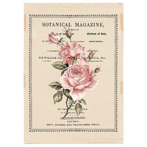 "Redesign Decor Transfer- Beautiful Botanist 24""x 34"""