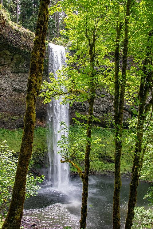 Silver Falls in Oregon