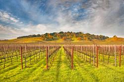 Vineyard Convergence