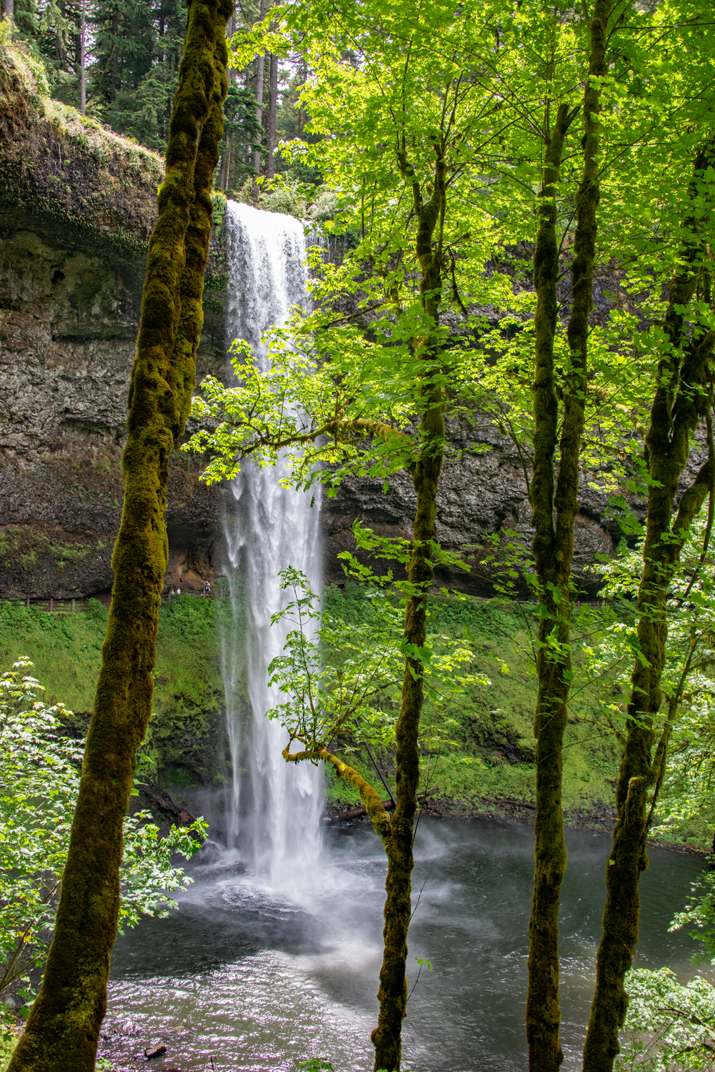 Silver Falls in Oregon