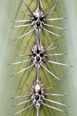 Cactus Masks
