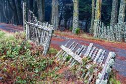 Weathered Fence-I