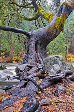 Twisted Tree-I