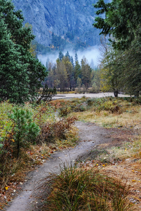 Wilderness Path in Yosemite