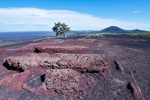 Cypress on Lava
