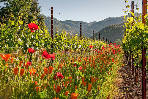 Poppies and Chardonnay