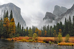 Golden Meadow in Yosemite