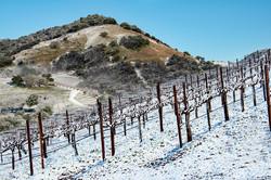 Snowy Vineyard