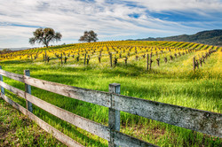 Mustard Fence