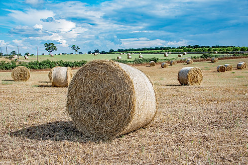 Puglia Hay Field