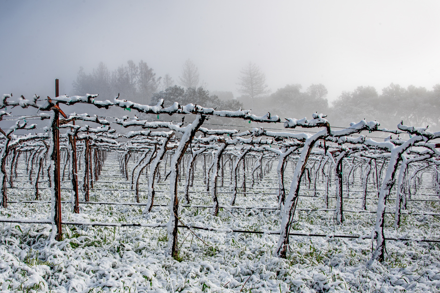 Vineyard Snowfall