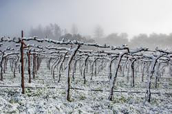 Vineyard Snowfall