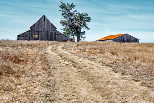 Two Barns and a Tree