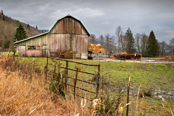 Sedro-Woolley Farm