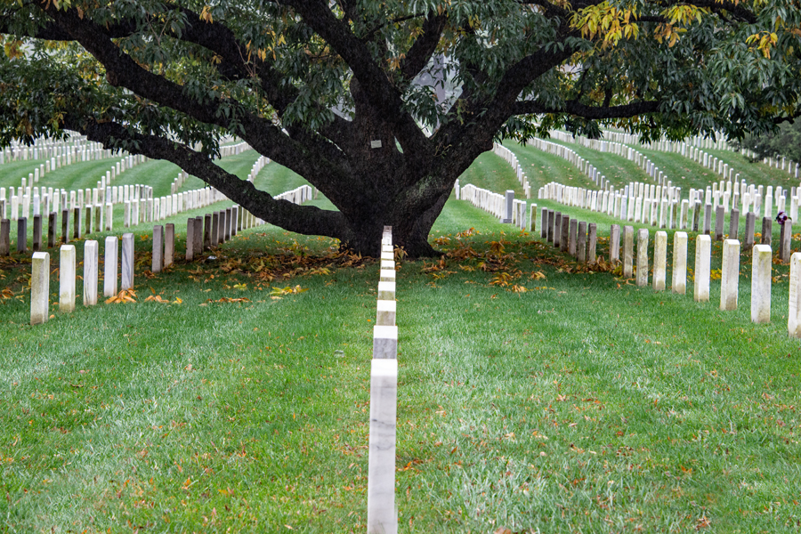 Oak Sentinel at Arlington