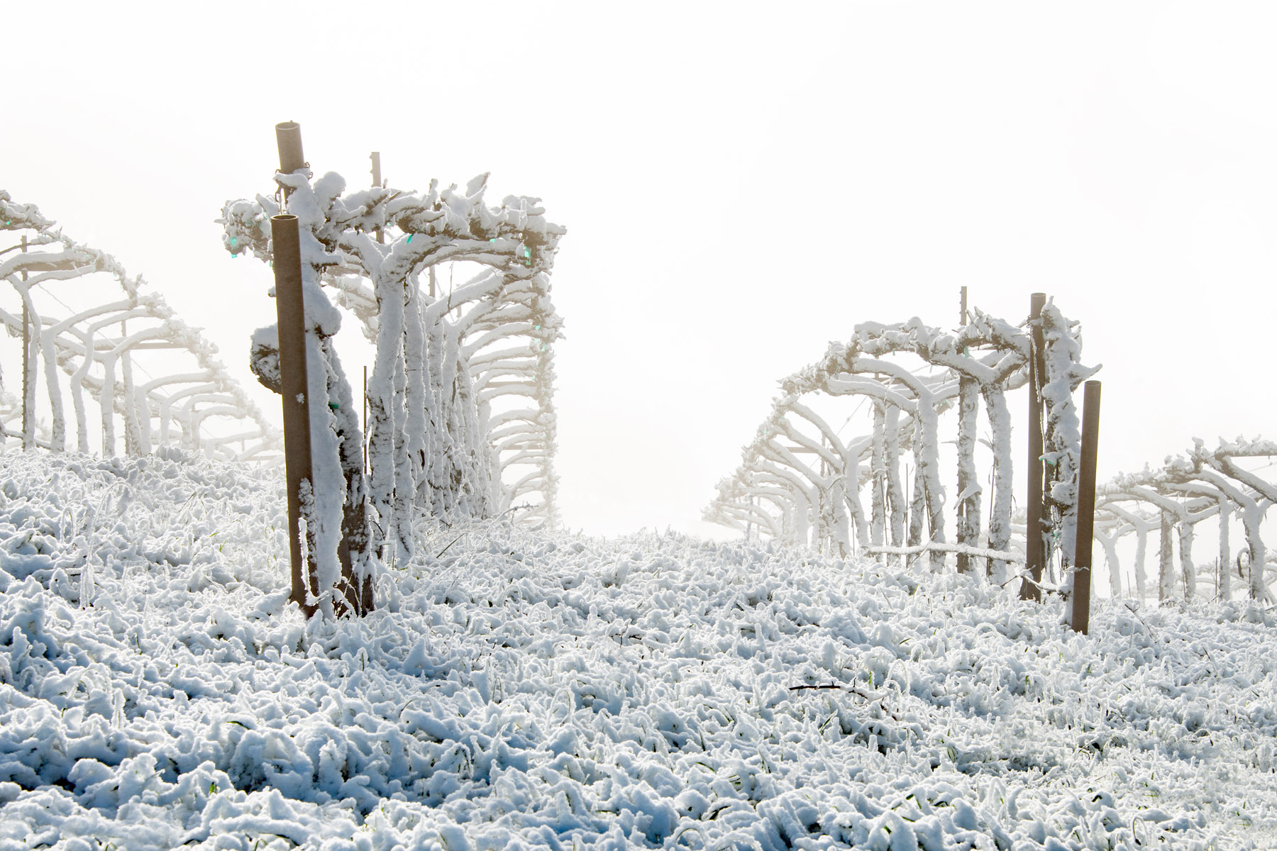 Vineyard Winterland
