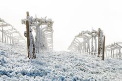 Vineyard Winterland