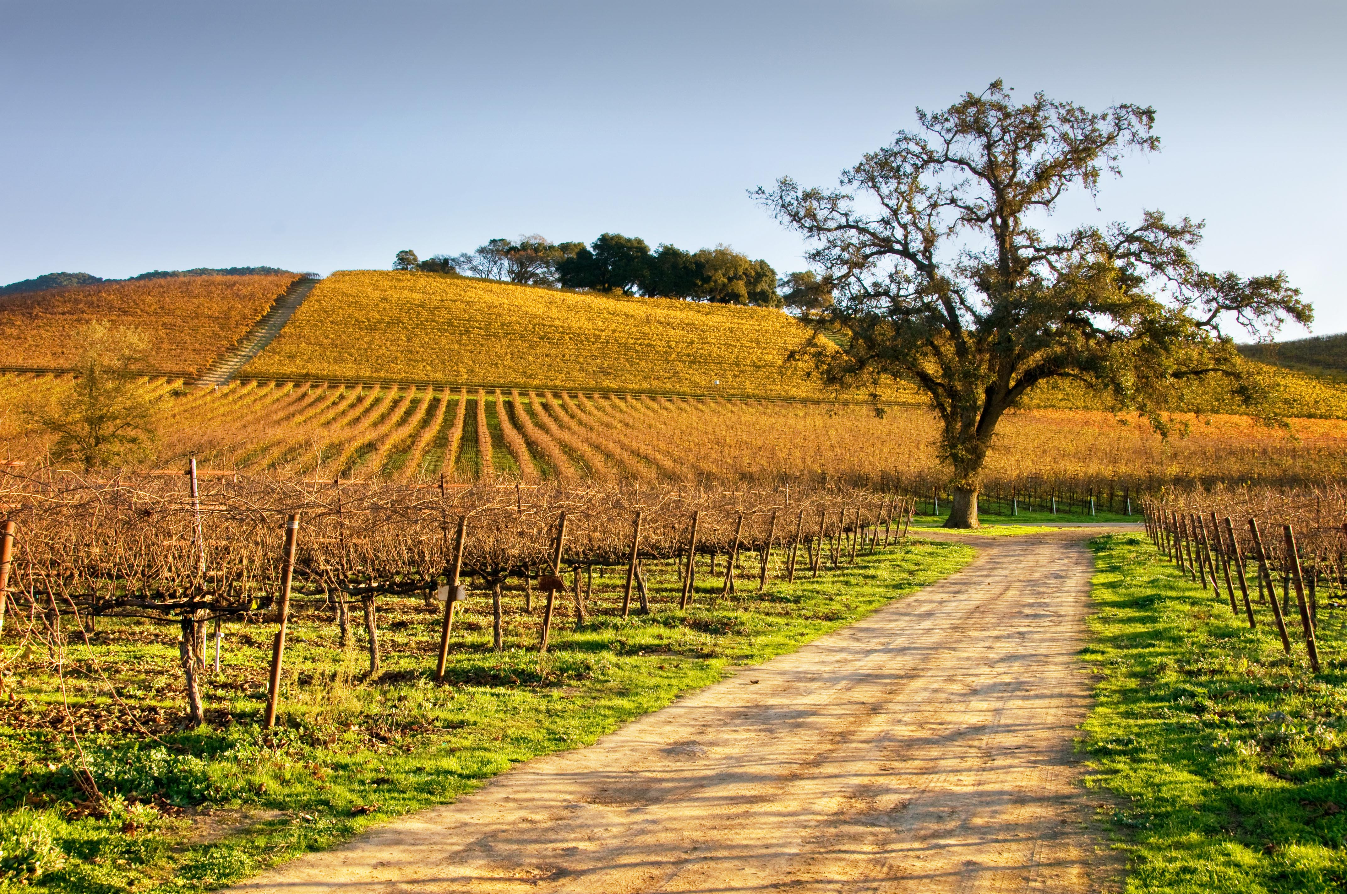 Autumn Vineyard Road