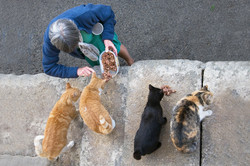 Cats of Provence