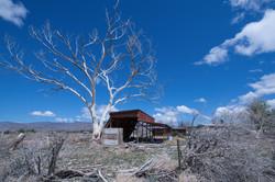 Desert Abandonment